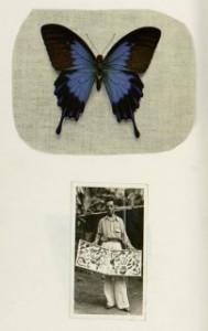 AndersonBlogCollectorsBalbenoitButterflies