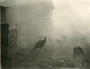 'A Corner of the Farmyard', P. H. (Peter Henry) Emerson, 'Marsh Leaves', (London, 1895), pl. XIII, SCM 08575.  University of Leicester Special Collections.
