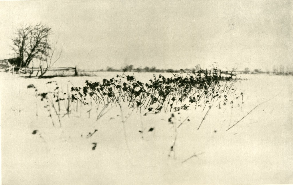 'The Snow Garden', P. H. (Peter Henry) Emerson, 'Marsh Leaves', (London, 1895), pl. XII, SCM 08575.  University of Leicester Special Collections.