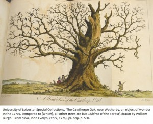 The Cawthorpe Oak, near Wetherby, an object of wonder in the 1770s, 'compared to [which], all other trees are but Children of the Forest', drawn by William Burgh. From John Evelyn, 'Silva', (York, 1776), pl. opp. p. 500.